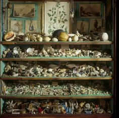 Collection of 18th-century curiosities including many shells in the mahogany secretaire bookcase