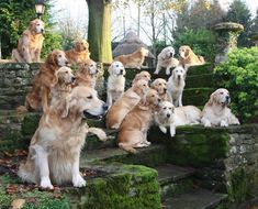 Golden Gates of Heaven. At least, this is what MY heaven would probably look like. #GoldenRetriever