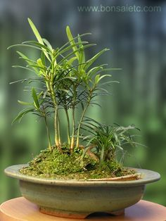 Indoor 'Wood by The Pond' Forest Bonsai Centerpiece by timtierney, $49.50