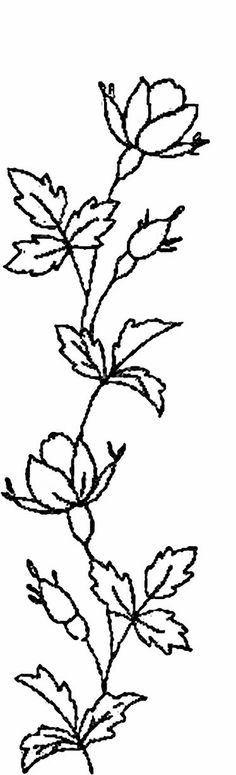 Zinnias Flower Coloring Page