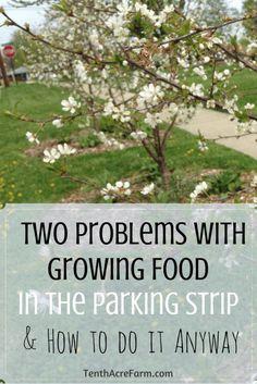 Parking strips are undervalued real estate primed for planting edibles. But…