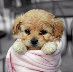 Cutest Animal in the World 2013 colage | Cutest Puppies In The World (17 Photos) | Swigga.com