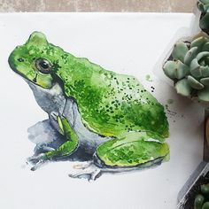 #иллюстрация #aquarelle #акварель #watercolor #illustration #illustrationgram #animalart #animalportrait #artsglobal #artstagram #worldofartists #frog #succulent #art_for_sale #art_we_inspire #topcreator #nawdens