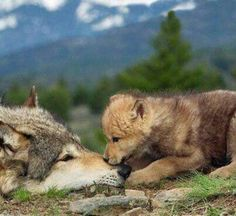 Nothing like the love of a mother and her child....