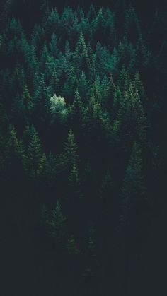 scenery of forest trees photo – Free Nature Image on Unsplash Forest Wallpaper Iphone, Iphone Wallpaper Night, Tree Wallpaper, Dark Wallpaper, Wallpaper Pictures, Nature Wallpaper, Reading Wallpaper, Heaven Wallpaper, Locked Wallpaper
