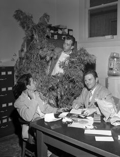 Suspect Arthur Hall being interviewed by police, as an officer displays a marijuana plant recovered in a recent raid, Los Angeles, California, 1950.