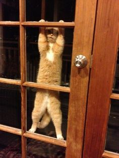 """Definitely a case of """"Hello from the other side!"""""""