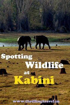 Discover the nature and wildlife of Nagarhole National Park at Kabini. A lovely short break from Bengaluru and Mysuru, Kabini is fun for adults and kids.