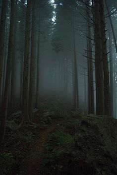 fog in the forest Beautiful World, Beautiful Places, Beautiful Forest, Slytherin Aesthetic, Dark Photography, Wedding Photography, Dark Forest, Misty Forest, Forest Path