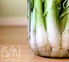 Grow Green Onions in Water!  Place the onions into a jar of water and put into a sunny window, rinse and refill the jar with fresh water every few days. You're able to use the tops as needed while keeping about 1 inch of the very bottom of the onion bulb intact to put back into the water. These bottoms will regrow their tops, which provides you with a never ending supply of green onions