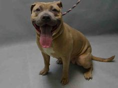 GRAY - A1101209 - - Brooklyn  TO BE DESTROYED 01/15/17 **ON PUBLIC LIST** -  Click for info & Current Status: http://nycdogs.urgentpodr.org/gray-a1101209/