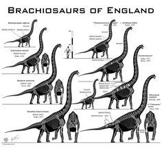 Klamelisaurus gobiensis skeletal by Paleo-King on DeviantArt Paper Plate Animals, Sea Whale, Skeleton Drawings, Dinosaur Crafts, Extinct Animals, Prehistoric Creatures, Jurassic World, Animal Design, T Rex