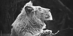 BAN Breeding, Trading and Trophy Hunting of Wildlife in South Africa | Hunting has become a sport, it is no longer a means to survive and therefore needs to end. Hunting has resulted in the depletion and extinction of far too many animals, not only in Africa but all around the World. Click for details and please SIGN and share petition. Thanks.