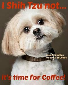 I shih tzu not - it's time for coffee!