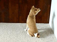 Quand ce chien a refusé de se retourner. | 23 victoires impressionnantes de la paresse