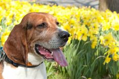 Aging takes a toll on our animal companions, but there are many things we can do to ensure that they are comfortable and happy in their golden years.