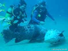 Diving at Rocktail Bay in iSimangaliso African Safari, Scuba Diving, South Africa, Destinations, Wildlife, Southern, Animals, Snorkeling, Animales