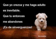 No será un cachorrito toda su vida, si no estás dispuesto a cuidarlo en su vejez mejor no tengas una mascota.