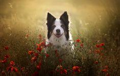 #PotD Jun 13 2021 by Alexandre Marques Lighting Diagram, Husky, Dogs, Animals, Jun, Animales, Animaux, Pet Dogs, Doggies
