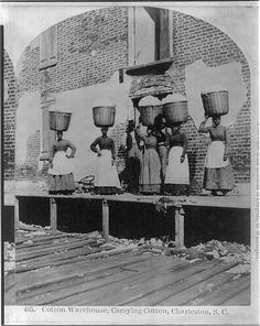 African Americans working, Charleston, S.C.: Cotton warehouse, carrying cotton, 1879