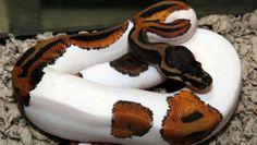 animais exoticos - Pesquisa Google