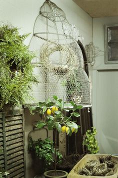 Bird cages big and small for decor