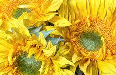 Exquisite sun rays by Heidi Smith