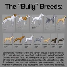 Bully Breed Breakdown--Gonna bring this to my next city council meeting.  There are plenty of Boxers and Boston Terriers in town!