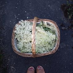 Elderflowers - Most common uses are for colds and flu, sinus infections, and other respiratory disturbances; Topically, elderflower might help reduce pain and swelling in joints due to some forms of arthritis and is used to stop bleeding. Elderflower also reduces blood sugar levels similar to insulin.