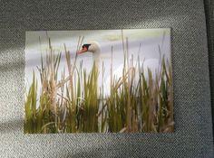 Foto 20x30 Asparagus, Aquarium, Birds, Vegetables, Plants, Studs, Planets, Asparagus Bacon