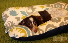 Deluxe Bunbed Dog bed for Dachshunds and other by TheOminousCloud, $48.00