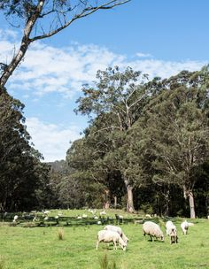 Pecora Dairy, a 230-acre property in Robertson in New South Wales' Southern Highlands