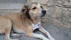 """""""O GRITO DO BICHO"""": Em Havana, animais abandonados nas ruas recebem id... #ogritodobicho#falabicho"""