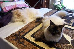 Colorpoint Quilter has great helpers!