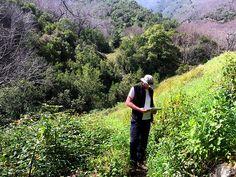 Trail finding on La Palma