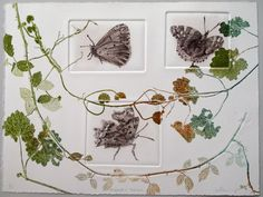 Hedgerow series. Butterflies. Drypoint and by LynnBaileyPrintmaker