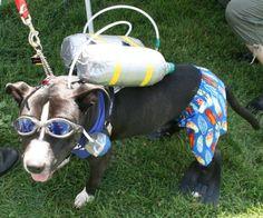 bullysmiles:  Scuba Diver Dog Costume by http://petsadviser.com...#pitbulls #dog breeds #canine pet #dogs #pitbull puppy #pitbull dog #pitbull breeds #red nose pitbull #pitbull terrier #apbt #staffordshire terrier #amstaff #english terrier #black pitbull #moo moo pit #chocolate pitbull #pitbull poodle #blue nosed pit #pitbull mutt #mans best friend #4 month old pitbull
