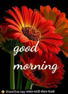 472 best Good Morning Gif photos by sonusunariya Good Morning Image Quotes, Good Morning Cards, Morning Thoughts, Good Morning Sunshine, Good Morning Picture, Good Morning Messages, Good Morning Good Night, Morning Pictures, Good Morning Wishes