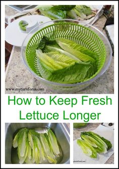 How to Keep Fresh Lettuce Crisper Longer My Turn for Us is part of Lettuce recipes - This is one of the best ways to store and keep our fresh lettuce crisper We use a couple of tricks and that is how to keep lettuce fresh and crisp Raw Food Recipes, Vegetable Recipes, Healthy Recipes, Healthy Drinks, Lettuce Recipes, Salad Recipes, Cooking Tips, Cooking Recipes, Vegetarian Recipes