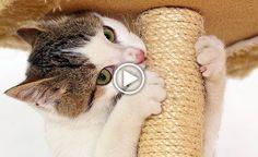 Come costruire un tiragraffi fai da te [VIDEO]