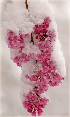 ** Winter in pink