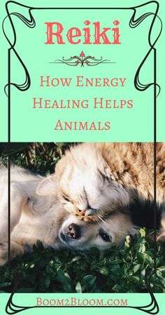 Reiki For Animals - Energy Healing Le Reiki, Reiki Room, Animal Reiki, Work With Animals, Stress, Reiki Energy, Healthy Pets, Holistic Healing, Alternative Medicine