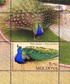 Zoo stamps, Birds, Indian Peacock, MNH, 2013, Souvenir sheet, 1v