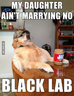 Those black labs are trouble