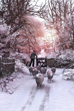 I love paintings of sheep.  (Dominic Davison)