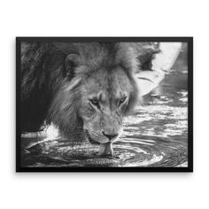 This canvas print is sure to make a statement in any space. It's hand-stretched on a poly-cotton blend canvas with a matte finish coating. Lion Pictures, Animal Pictures, Amazing Pictures, L Is For Lion, Stretched Canvas Prints, Framed Prints, Exotic Pets, Exotic Animals, Beautiful Cats