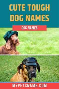 We think 'Bear' definitely suits the Newfoundland dog breed. These are large working dogs who are huge. They are also the cutest and chubbiest puppies who resemble a big and tough bear. Find more such cute tough dog names in our guide here.  #toughdognames #cutetoughdognames #strongdognames Strong Dog Names, Tough Dog Names, Cute Pet Names, Chubby Puppies, Working Dogs, Newfoundland, Four Legged, Dog Breeds, Bear