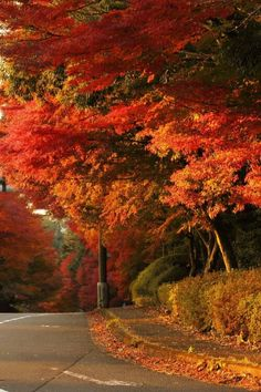 Uploaded by dαydreαming. Find images and videos about nature, autumn and fall on We Heart It - the app to get lost in what you love. Beautiful World, Beautiful Places, Beautiful Pictures, Beautiful Sunset, Autumn Scenes, Seasons Of The Year, Fall Pictures, Autumn Photos, Fall Images