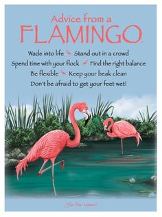 This special friend of nature shares its timely advice and heart-ticking wisdom! Advice from a Flamingo Wade into life Stand out in a crowd Spend time with your Flamingo Painting, Flamingo Decor, Pink Flamingos, Flamingo Outfit, Flamingo Gifts, Flamingo Pictures, Vintage Tin Signs, Stand By You, Pink Bird