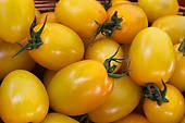 Yellow plum tomato Yellow Plums, Bright Yellow, Yellow Tomatoes, Color Meanings, Yellow Painting, Royalty Free Images, Seeds, Stock Photos, Plants